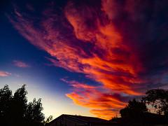 Waving the Sun Goodbye (Steve Taylor (Photography)) Tags: garage roof blue black orange yellow newzealand nz southisland canterbury christchurch northnewbrighton tree silhouette sunset summer weather cloud sky