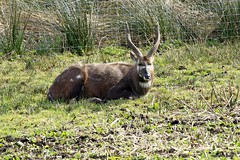 _MG_1967 (M0JRA) Tags: life park wild animals yorkshire