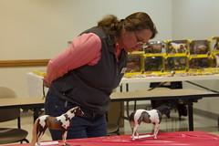 SC 4-H Breyer Horse Show (Delaware 4-H) Tags: horses delaware horseshow 4h sussexcounty breyerhorse de4h