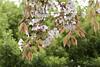 sakura (fototsubu) Tags: flower fujifilm x10
