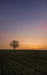 Lonely dawn (grbush) Tags: morning tree nature field landscape dawn farm bedfordshire minimalism minimalist lonetree daybreak lonelytree swineshead tokinaatx116prodxaf1116mmf28 sonyslta77