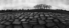 Almlunden (Foide) Tags: film analog stockholm worldheritage skogskyrkogården selfdeveloped horizonperfekt almlunden