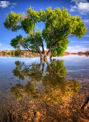 Watson-Lake-8710_1_2_3_4_tonemapped (Michael-Wilson) Tags: arizona tree spring az prescott watsonlake michaelwilson