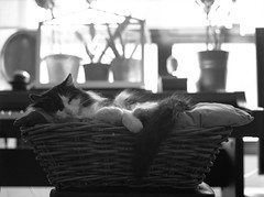 Leica's wicker basket 1 (Victor.Colas) Tags: bw byn mamiya home cat self one stand 645 shot delta indoor iso gato 200 epson rodinal development ilford v500 m645 r09
