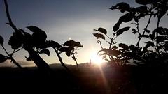 In love with (kinda) sun flare photography these days #sun #sunny #sunflare #malang #indonesia #photography  #beautiful #scene #view #mountain #sunset (veneishiag@rocketmail.com) Tags: sunset sun mountain beautiful indonesia view sunny malang sunflare