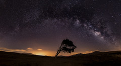 The tree and Milky Way. (Pedro Lpez Batista) Tags: sky tree canon arbol star noche fuerteventura canarias cielo 7d estrellas canary canaryislands milkyway starlight vialactea 7dmarkii