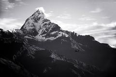 Machapuchare (Neal Chin) Tags: nepal mountain fish tail pokhara sarangkot