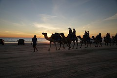 Camel train at sunset, Cable Beach, Broome (jozioau) Tags: sunset beach silhouettes kimberley camels broome riders variosonnart282470