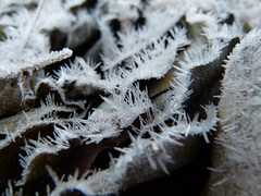 (IgorCamacho) Tags: gelo ice frost geada macro southern brasil paran natureza nature