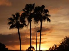 Orlando Palms (vbvacruiser) Tags: cruise sunset vacation palms orlando florida caribbean ncl embassysuites norwegiancruiseline nclstar