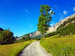 destinations (anbri22) Tags: anbri leukerbad destinations path sentiero walking tree trees blue sky cielo peaceful