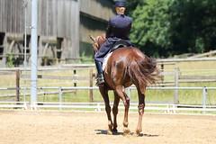 IMG_5012 (dreiwn) Tags: horse pony horseshow pferde pferd equestrian horseback reiten horseriding dressage reitturnier dressur reitsport dressyr dressuur ridingclub ridingarena pferdesport reitplatz reitverein dressurreiten dressurpferd dressurprüfung tamronsp70200f28divcusd jugentturnier