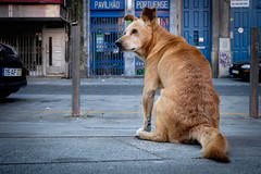 O co Portuense #2 (AlpixImages) Tags: street chien co portugal candid streetphotography porto fujifilm rua rue couleur trottoir portuense xt1