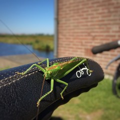 Lifter (Harry -[ The Travel ]- Marmot) Tags: instagramapp square squareformat iphoneography uploaded:by=instagram holland nederland netherlands dutch hollands nl grasshopper sprinkhaan groen green dier animal insect saddle bike bicycle bicyclette fiets vouwfiets bompton zaanseschans allrightsreservedcontactmebyflickrmail