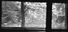 Forest morning through the window (Man with Red Eyes) Tags: m2 leicam2 zeiss zeisssonnarc50mmf15 kodak trix td201 analog blackwhite monochrome hampshire forestrycommission forestholidays f15 wideopen morning light window blinds forest blackwood 3 three threeofakind