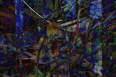 steelgrass (ralphW) Tags: layered collage