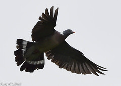 Pigeon flight (Katy Wrathall) Tags: 2016 eastriding eastyorkshire england july summer garden