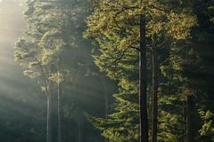 Sloden Inclosure (Stu Meech) Tags: sloden inclosure new forest light mist beams haze hampshire nikon d750 70200 f4 stu meech