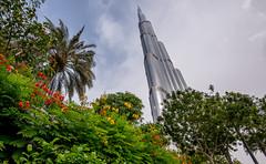 Flora and Khalifa. (Paul Babington Photography) Tags: burjkhalifa dubai uae tower nikon holiday nikond750