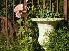Rose mit Krug (bolliger51) Tags: mtschwil zaun rosen luginbhl museumluginbhl bernhardluginbhl rost rostig rosa rose krug eisenzaun bern schweiz che