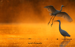 Morning Drama (jadi_jal) Tags: nature naturephotography naturelover natural beautiful beauty light gold bokeh flight landing mist fog flicker jawads photography sialkot pakistan