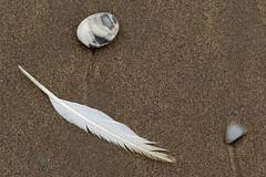 Nature's artwork on the shores of Coin-du-Banc (Perc), Qubec (Ullysses) Tags: coindubanc perc qubec canada gaspesie shore plage sea mer summer t feather plume