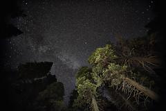 _DSC7739 (brianbostwick1) Tags: yosemite star starpicture starlight stars starrysky starsky sony sonya7r sony16mm trees nature naturelovers upshot