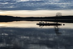 Summer's last gathering (Tove Paqualin) Tags: silhouette water landscape birds mirror divingtower geese sunrise serene sweden sky