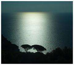Costiera amalfitana (kurtwolf303) Tags: amalfi coast kste italy italien italia salerno trees bume scherenschnitt water wasser ocean meer kampanien olympusem1 omd microfourthirds micro43 systemcamera horizon horizont natur nature topf25 250v10f topf50 costieraamalfitana unlimitedphotos gegenlichtaufnahme topf75 backlight 500v20f campania europe flickrelite topf100 750views 900views 1000v40f topf150