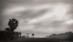 20161005_1249 Dawn above rice field (otaphoto16) Tags: blackandwhite landscape ricefield cambodia light sun palm tree fog canon70d otaphototours morning bw rice haze