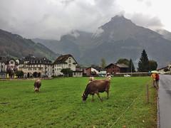 141005170200 () Tags: schweiz switzerland suisse swiss luzern svizzera lucerne engelberg cliffwalk  2014 titlis 10  icdflyerchairlift blacierpark