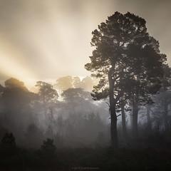 Scottish Nature Photographer 2014, The Landscape Category, 3rd place. (Roksoff) Tags: mist tree landscape argyll glencoe lochtulla bridgeoforchy scotspine scottishlandscape caledonianforest leefilters nikond600 landscapecategory scottishnaturephotographeroftheyear thelandcategory