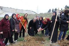 8 Mart Dünya Kadınlar Günü Hatıra Ormanı Fidan Dikimi