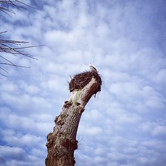 Kakkersnest #igers #visitholland #zeeland #stork #latergram (stimorolthy) Tags: zeeland stork visitholland igers latergram uploaded:by=flickstagram instagram:photo=677623993370513740577147
