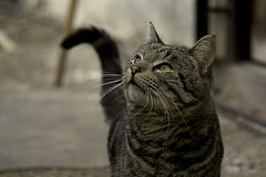 CatLuck (jxhx13) Tags: cat master gato lucky independencia