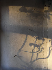 late light (the incredible how (intermitten.t)) Tags: light shadow window kitchen wall nails latelight 0633 immersionheater 20150322