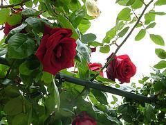 16871988957_7fc93ff8e4_m (Lihy Arts) Tags: ☀ ღ ♫♫ ❤ ☀ღ♫♫❤ ♪ musicforthemind happiness bonnejournée ღϟツ ϟღツ amoureux amitié romantique romanticlove love romantic 情人节 バレンタイン การ์ดแสดงความรัก greetingcards cartesdevœux 有花 草 山 水 樹 美 讚 merci lihi tain m lyy25 יעל