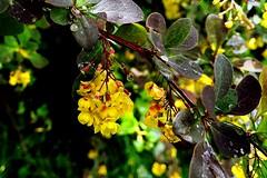 The beauty of colors :) (*Tue*) Tags: color colour beauty rain spring flickr colours rainy raindrops flickrphoto flickrturkey springthime