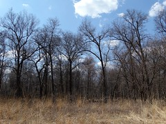 Ojibway Park (chuckcapsis) Tags: park trees sky ontario canada clouds outside outdoors spring windsor hdr ojibway