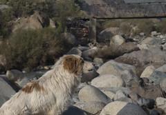Snoopy (Jos BG) Tags: naturaleza nature cajondelmaipo a5000 sonya5000
