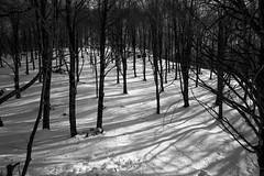 Chiaro Scuro (luigig75) Tags: trees italy white mountain black italia monte lazio beechwood faggi 70d efs1022mmf3545usm faggeta livata parconaturaleregionalemontisimbruini