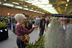 2016-07-23 08794 Orchid Show, SF County Fair Bldg (Dennis Brumm) Tags: sanfrancisco california july 2016 orchids exposition flowers plants bromeliads