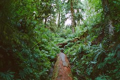 (adie reed) Tags: film 35mm lomo lca forestpark portland oregon summer