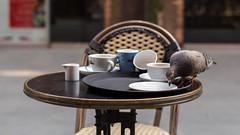 Pigeon For Tea (petercooper131) Tags: london pigeon coffee bankside south bank tea animal bird drink lunch