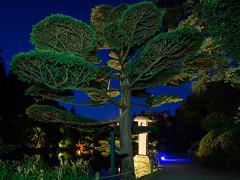 DSC05469 (regis.verger) Tags: temple parc nocturne asiatique vgtal maulvrier zennuit