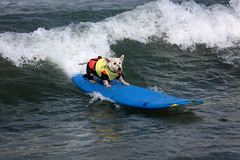 "Surf Dog Competition-EK-073016 (25) • <a style=""font-size:0.8em;"" href=""http://www.flickr.com/photos/25952605@N03/28110526784/"" target=""_blank"">View on Flickr</a>"