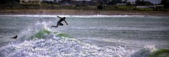 Wipe Out! (fotonut NZ) Tags: surf surfer waves spill beach outdoors whakatane heads outdoor wave water sea