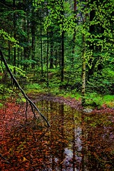 Haraldsvang, Norway (Vest der ute) Tags: trees water norway forest reflections rogaland haugesund fav25 g7x
