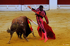 The Matador (Fotomondeo) Tags: matador toro toros plazadetoros corridadetoros torero bull bullfight bullfighter bullring alicante alacant espaa spain hoguerasdesanjuan fogueres fujifilmxm1