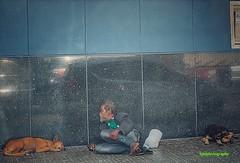 Urban Loyalty (Halcon122) Tags: street man color dogs downtown candid homeless streetphotography kingston barefoot ja olympusem5markii